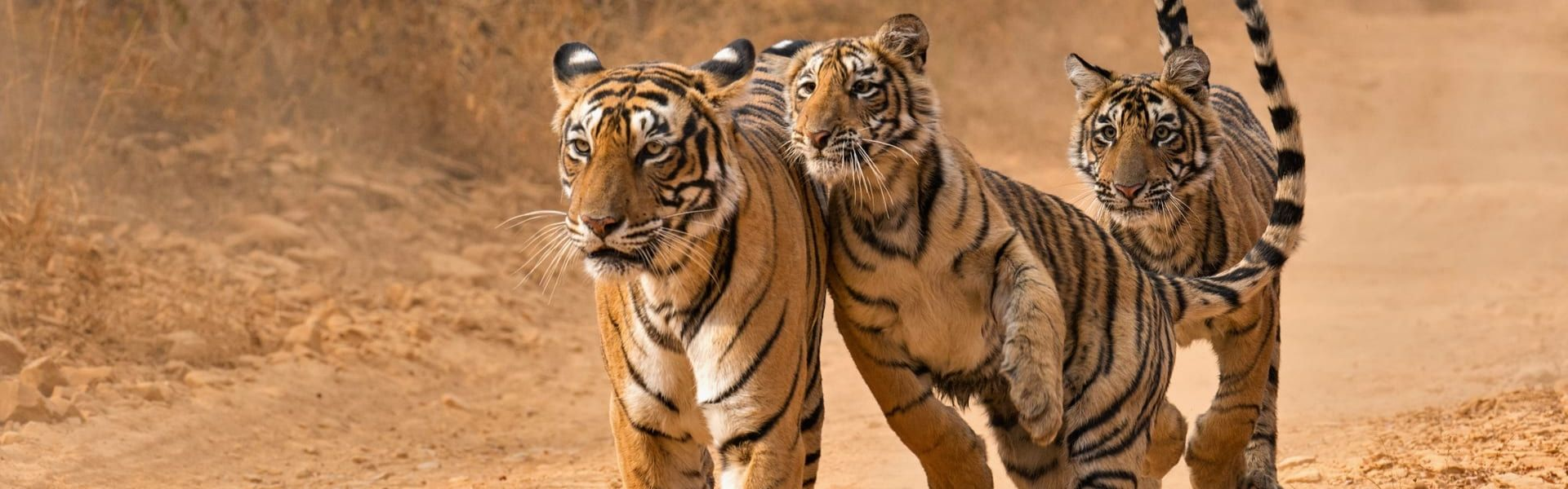 ranthambore tiger reserve,india tour,incredible india,tailor made holidays
