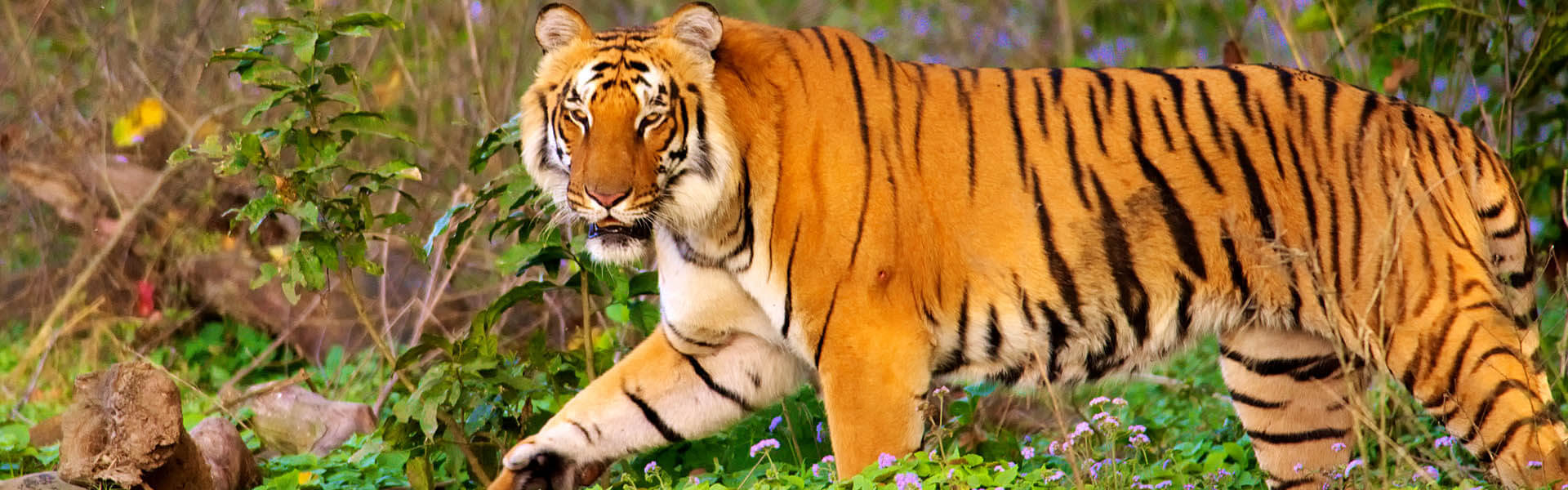 Corbett National Park, Jim Corbett, National Park